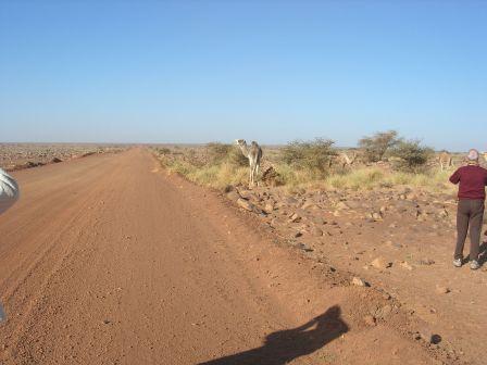 rencontre mauritanie